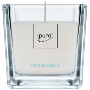 ipuro cotton fields kerze online kaufen bei. Black Bedroom Furniture Sets. Home Design Ideas