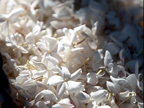 Jadore Fleurs Livre